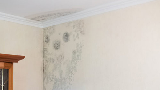 drywall water damage plaster repair services sydney